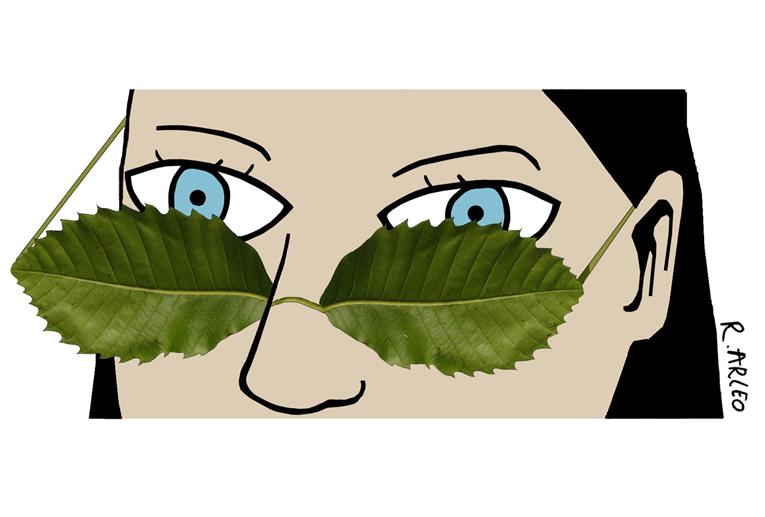 phytothérapie : regarder du côté des plantes